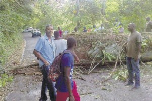 A really large tree blocking the road in Dressikie, St. Mary in 2013, during a protest.