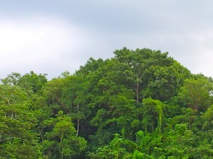 Rain clouds gather over the treetops in the afternoon. The setting is lush and green. (My photo)