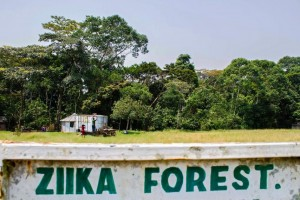 A signpost leading to Zika forest in Uganda, January 29. The Zika virus was first discovered in the forest in 1947, but there have been very few confirmed cases locally in recent years. ISAAC KASAMANI/AFP/GETTY IMAGES