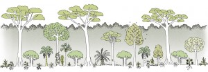"""How about a """"food forest"""" like this?  (Graphic by Greenpeace)"""