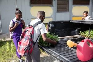 Plant Jamaica, a great social enterprise, has a growing school garden programme.