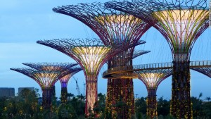Singapore's solar-powered supertrees. (Photo: CNN)