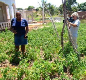 A farmer in St. Elizabeth explains her challenge with drought and water shortages, filmed by Esther Figueroa. (My photo)