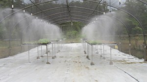 Bright River Greenhouse, a PPCR project.